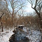 Winter Morning at the Creek by MarjorieB