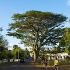 When nature makes you feel small - Tonga by Ainslie Fraser