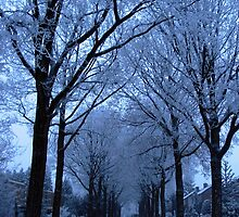 Street and Frozen Trees by ienemien