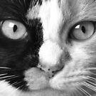 """""""Calico Eyes"""" - Ying and Yang Cat by John Hartung"""