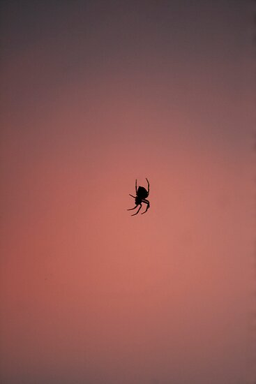 evening spider by David  Moss