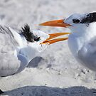 """ Hey ! Mom Said it Was MY Tern "" by Renee Blake"