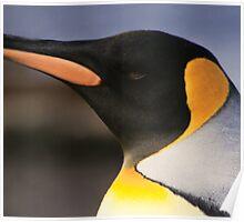 King Penguin, Heard Island Poster