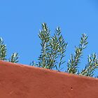 Olive Branches 'Twixt Wall and Sky by Ian Ker