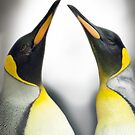 """Cool Affection"" - King Penguins by John Hartung"