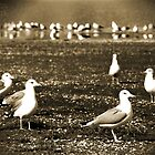 Lake Vacation: Great-Grandpa Seagull Family Portrait  by Corri Gryting Gutzman