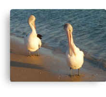 Morning Chat Canvas Print
