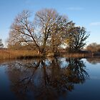 Reflections on the riverbank, Broadland. by Sarah Weston