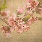 Peach Blossom by Angi Allen