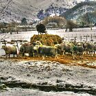 Sheep on Hay by Paul  Nelson