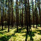 Breckland - Thetford Forest by Christopher Cullen