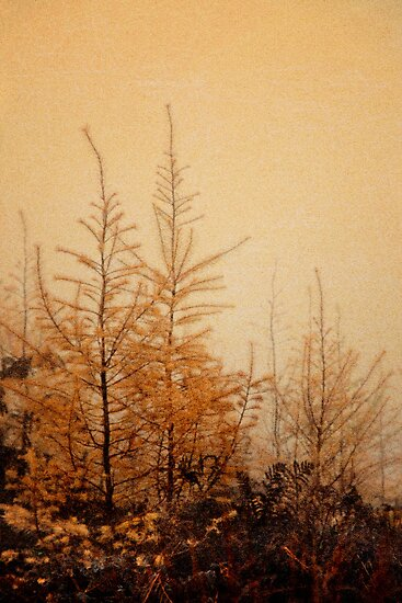 Little Larches by Ann Garrett