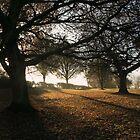 Dawn Time by GlennB