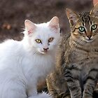 Two Little Kittens by Sue  Cullumber