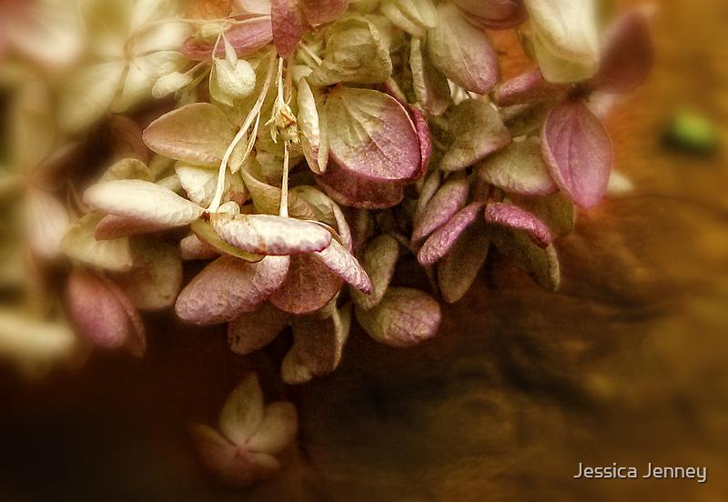Hydrangea Petals by Jessica Jenney