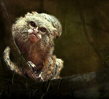 """""""Pygmy Marmoset & Baby ..."""" by Rosehaven"""