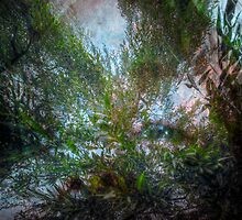 Gazing up at the sky through willows by Glenn Gilbert
