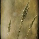Wild Grasses by Chris Armytage™
