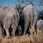 Elephant - Bums up! by lucynab