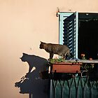 Cat on the balcony by solena432
