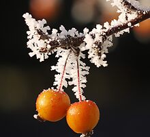 Frosty Crab Apples by Gabrielle Battersby