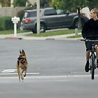 Look both ways ... (My Son with his dog in training Dec. 2010 La Mirada, CA USA)  All Rights Reserved Lei Hedger  by leih2008