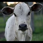Curious little calf by Danielle Espin