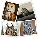 Owls - Collage by Angela Pritchard