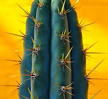 Cactus plant and yellow wall by bhandol