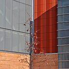 One tree by Sandra Guzman