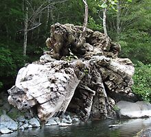 The Floating Log - Chetco River, Northern California by mayauribe