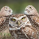 """The Eyes Have It"" - burrowing owls by John Hartung"