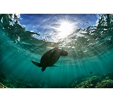 Dramatic turtle silhouette HDR Photographic Print