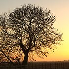 Tree in silhouette by Neil Crittenden