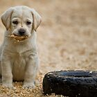 Born Retriever by Bill Maynard