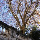 A tree on a Street in Rome by minikin