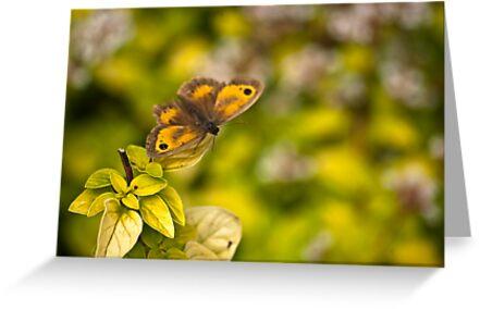 Gatekeeper Butterfly #2 by Trevor Kersley