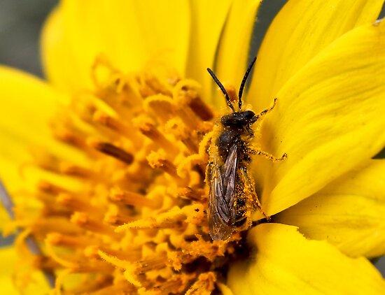 Bee's Pollen by Pam Hogg