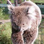 Fuzzy by Bob Hardy