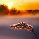 Winter mist by natans