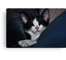 """ Catnip Nap "" Canvas Print"