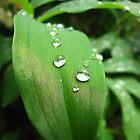 Dewdrops - Southern Oregon by mayauribe