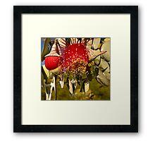 """""""Red Flowering Eucalyptus Macrocarpa"""" Framed Print"""
