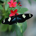 Butterfly on Flower by Sandy Keeton