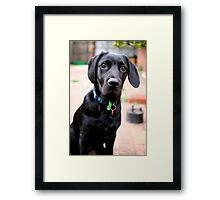 Omar grows up Framed Print