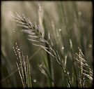 ~ Morning Dew ~ by LeeoPhotography