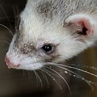 Ferret with droplets by Caroline Hannessen