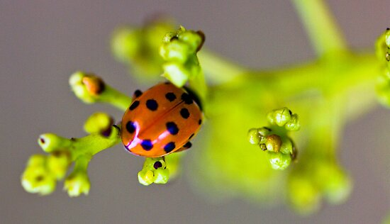 Dotty Life by JSumpton