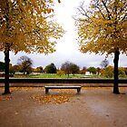 Lourve, France. - Autumn leaves falling by adrianfowlers