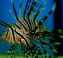 A Lionfish by kneff